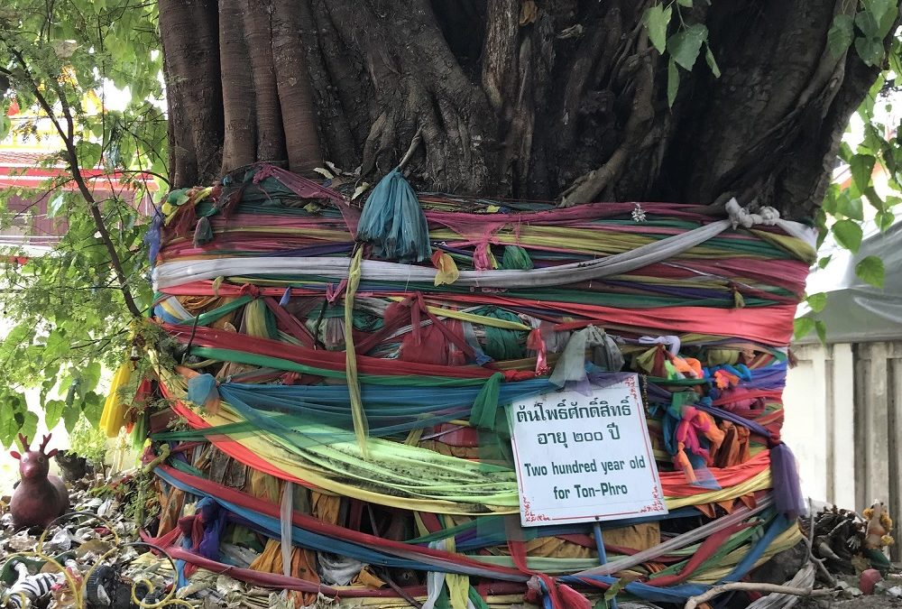 Drzewo Bohdi – Święte drzewo wielu religii