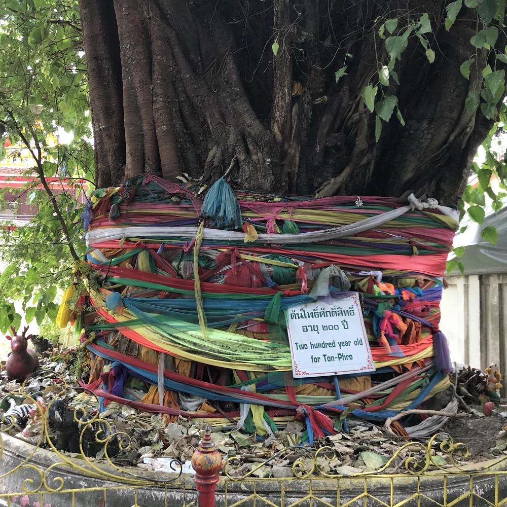 Drzewo Bohdi